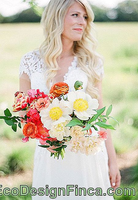 Flowers for wedding: bridal bouquet with giant daisies