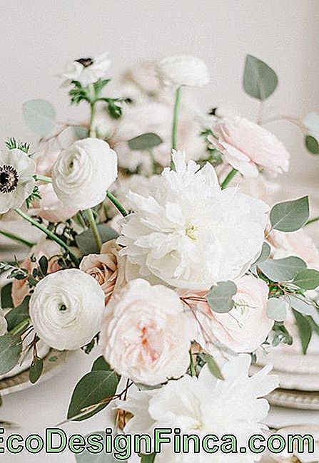 Flowers for wedding: for those who prefer a clean wedding decoration, can use white peonies