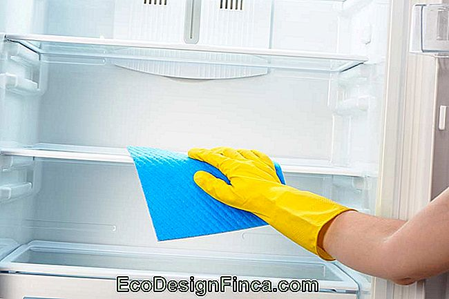 How To Clean Refrigerator: 25 Practical Tips To Keep Everything Always Clean