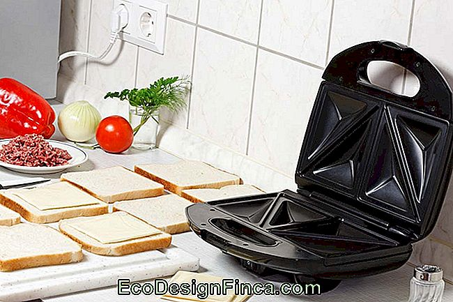 Sandwich maker ren