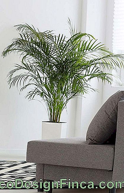 Areca Bamboo Relaxing Room vide