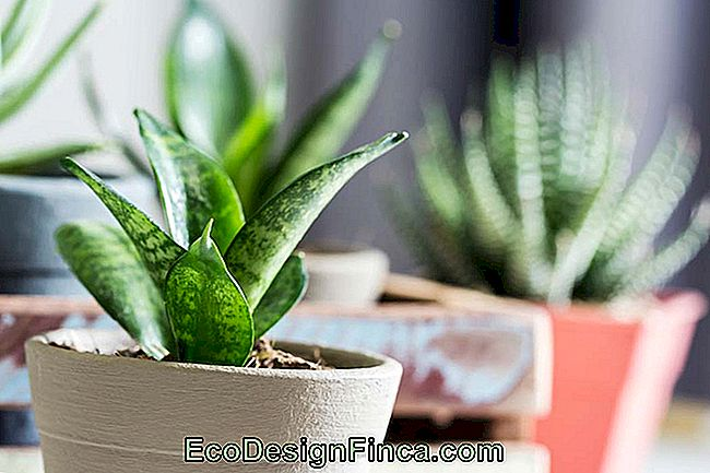 Room Plants: Main Species And Tips For Decorating With Photos