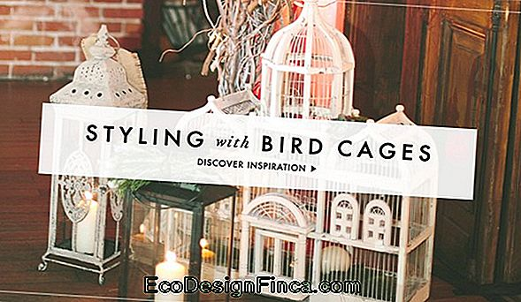 50 Decorative Cages: How To, Tips And Photos!
