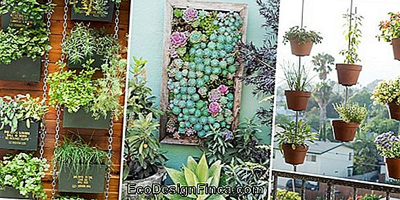 Vertical Vegetable Garden Suspended: 60 Projecten En Stap Voor Stap!