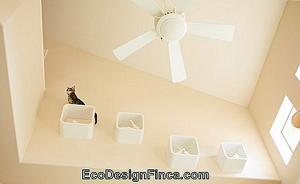 Cat Nests And Shelves - 50 Cute And Interactive Inspirations!