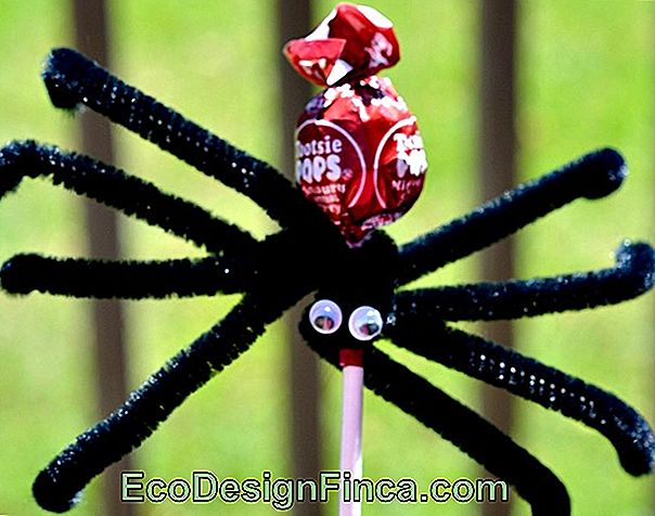 Lollipop Spider