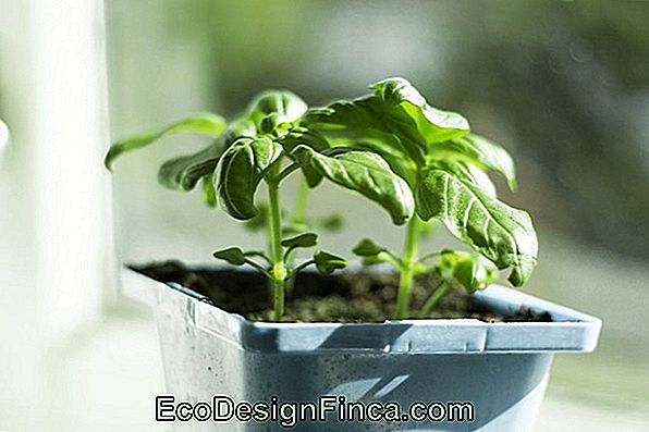 07 Indoor Plant Tips