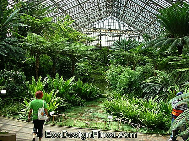 The Garfield Park Conservatory Greenhouse