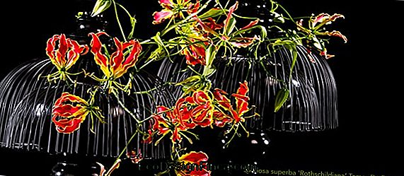 Glorious Flower (Gloriosa Rothschildiana)