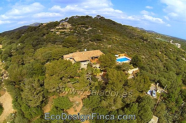 Horta In Mountain Property