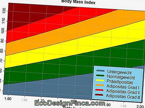 Body Mass, Der Mc Index Wie Funktioniert Das?