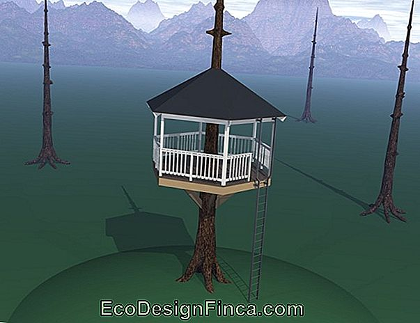Tree House: 60 Models For Adults And Children!