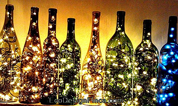 Decorative Bottles: Let'S Recycle?