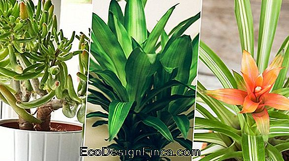 Indoor Plants At The Service Of Your Health