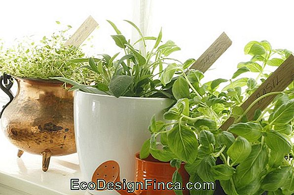 Aromatic Herbs At Home