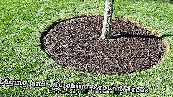Mulching: What It Is And How To Use It