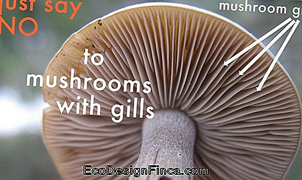 Edible Or Poisonous Mushrooms: How To Identify