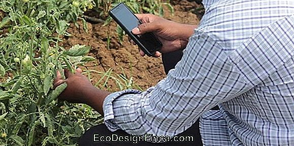 Plantix - Know The Application That Promises To Help Farmers In Pest Control