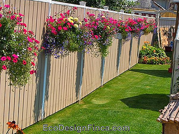 Ideas For You To Have More Privacy In Your Garden