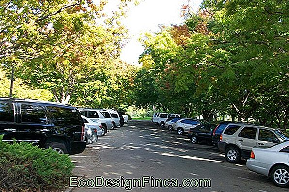 Trees To Shade Parking Lots