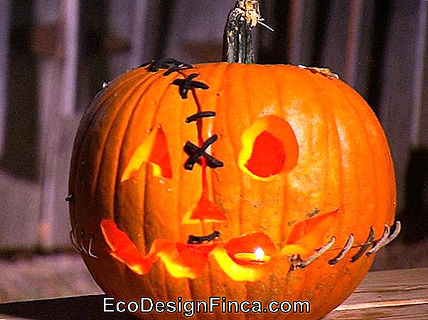 Zucca Di Halloween - How To? + 60 Idee Super Creative!