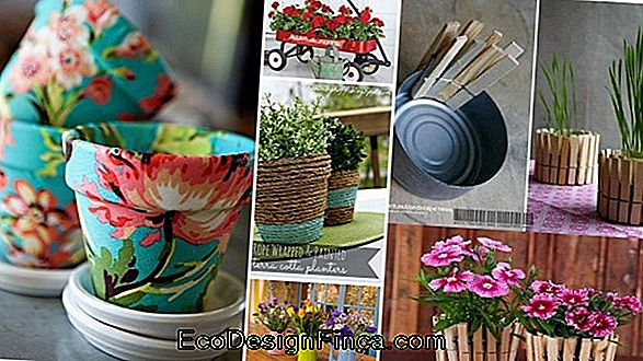 Flower Arrangements: Plant Species And Decoration Inspirations