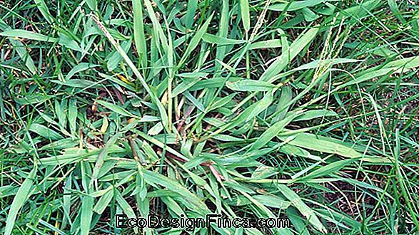 Types Of Grass: See The Characteristics Of Grasses For Garden