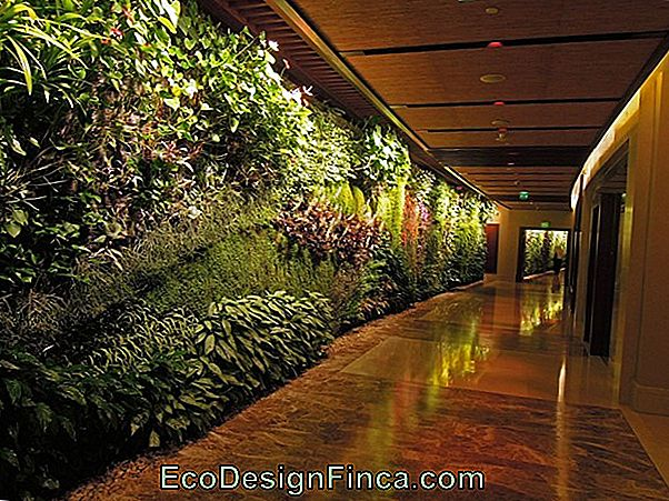 Vertical Garden: See Plant Species And 70 Decorating Photos
