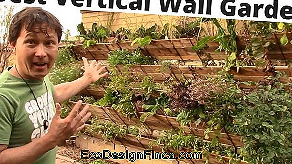 Vertical Vegetable Garden: Learn How To Assemble And Decorate With 60 Images