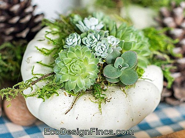 Zamioculca: Learn How To Care, Plant And Decorate With 58 Ideas