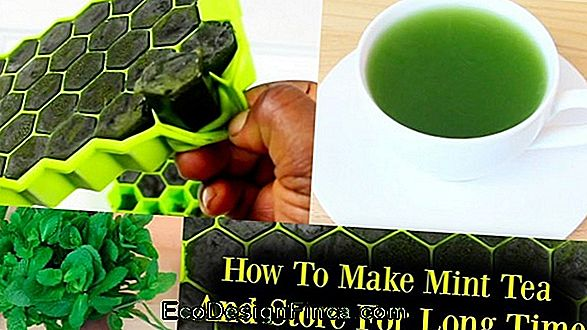 How To Store Fresh Mint Leaves