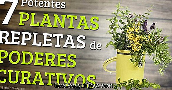 Farmacia Natural En Casa: Descubra Cuáles Son Las Plantas Ideas!