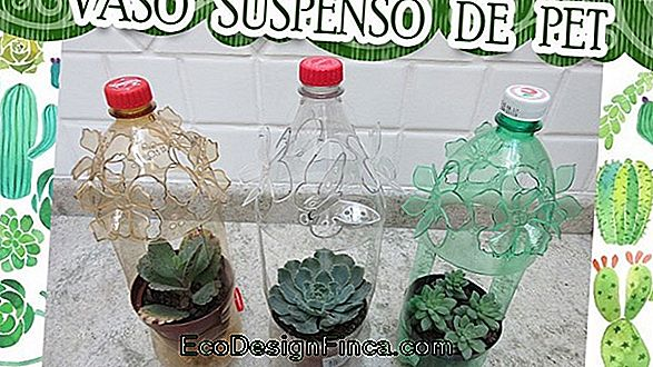 Mudas En Botellas Pet