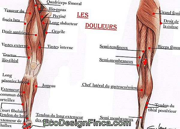 Blessures Musculaires Du Tibia!
