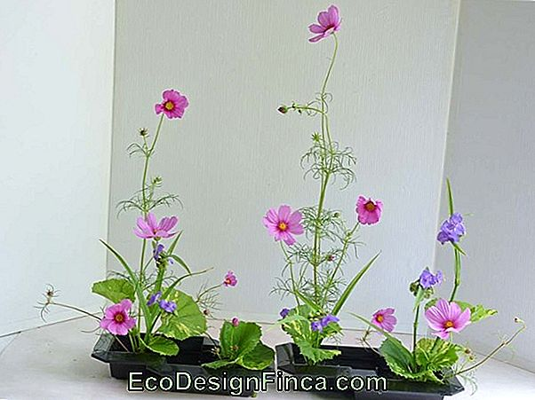 Arrangement D'Ikebana: Comment Faire