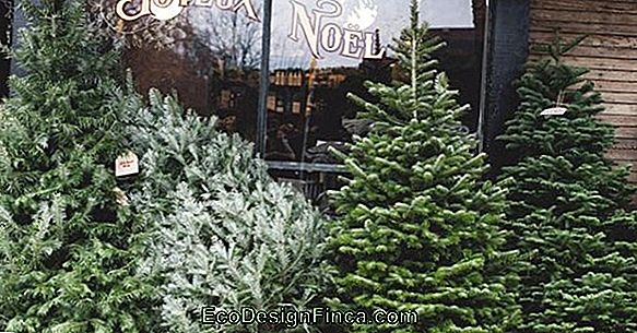 Alternatives Aux Arbres De Noël