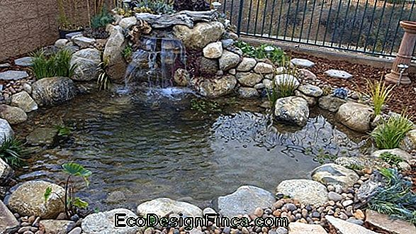 Fish Pond In The Garden: Come Realizzare Le Tue 20+ Foto Fantastiche Da Ispirare!