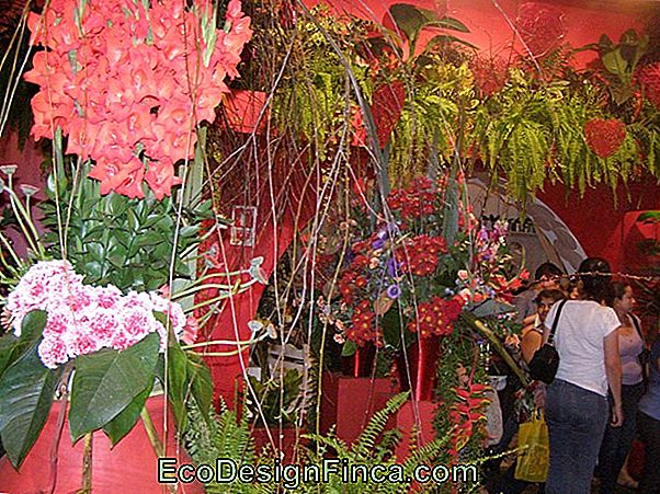 Holambra Ontvangt Expoflora In September