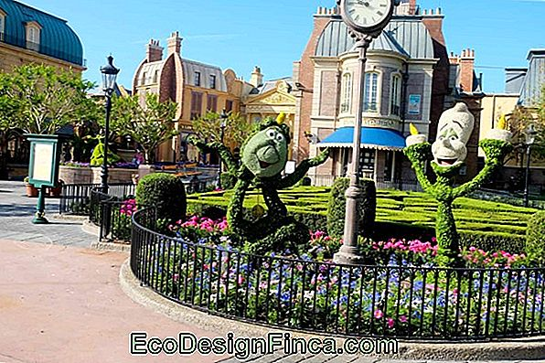 International Flower And Garden Festival Gebeurt In Disney