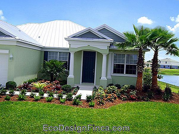 Imperial Palm Tree: Landscaping Tips And How To Care