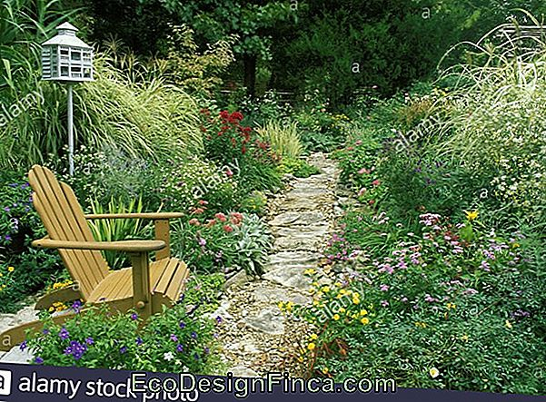 Landscaping Around Garden Paths