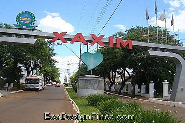 Xaxim Of Fern-Açu