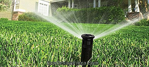 Tips Voor Home Garden Irrigation