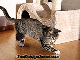 Come prevenire il tuo gatto Scratching Furniture