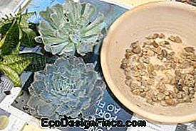Arrangement-succulentes-1