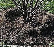 Mulch Tree Covered Soil Cover