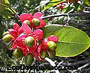 octa-with-fruits