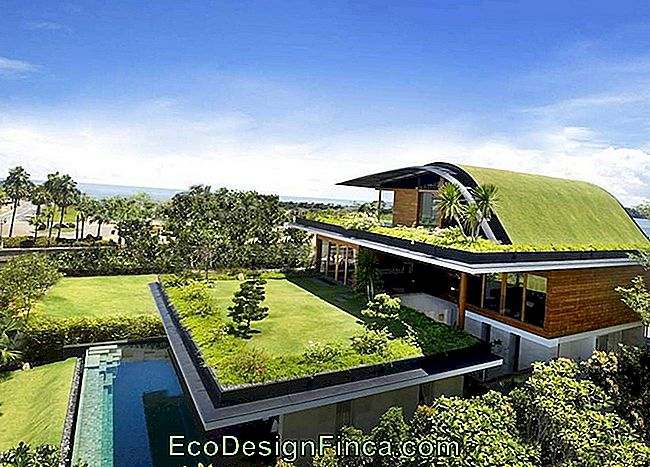 Green Roof: Rooftop Gardens