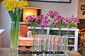 Orchid Spaces at Home